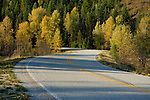 Road 208 in the Coeur D'Alene National Forest follows the North Fork of the Coeur d'Alene River and is a scenic drive in Fall. Idaho, USA