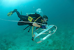 Magda Blazewicz handles her trawling sand collector underwater to  collect sand which may have crustaceans Tanaidacea.