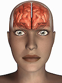 Biomedical illustration of the human brain in frontal view superimposed on a female head