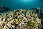 Coral reef in the far northern outer Great Barrier Reef. Coral formations are streamlined because of heavy surf and waves throughout the year.