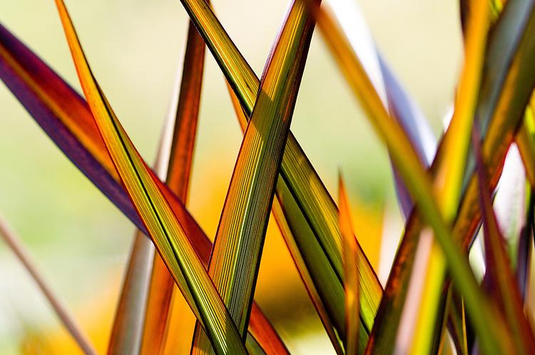 Flax Pattern, New Zealand - stock photo, canvas, fine art print