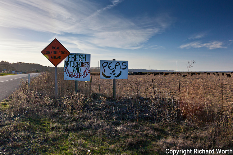 With cattle in the background, fresh produce is promoted with simple hand-made signs along Highway 1 south of San Francisco on an early October morning.