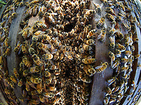 Opening a beehive is amazing