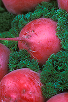Heirloom vegetable beets Chioggia, miniature dwarf variety suitable for container garden pots.