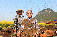 Le corps recouvert d'abeilles, Monsieur Yang Chuan attend tranquillement que ses aides le débarrassent des milliers d'abeilles.///His body covered in bees, Mister Yang Chuan calmly waits while his assistants get the thousands of bees off him.