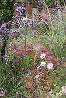Gardening for Wildlife, particularly butterflies & birds: Verbena bonariensis, Sedum, Cosmos 'Candy Stripe', ornamental grasses in backyard