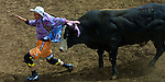 A rodeo clown barely escapes the horns of a bull while distracting for a fallen rider during the St. Paul Rodeo.