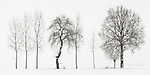 Snow in the ground and hazy atmosphere are just the best conditions for highly graphical and minimalist photos such as this one. I took this picture in the fields around my home town of Scalenghe in Piedmont, Italy, on a cold morning at the middle of Decemeber, a few minutes after sunrise and under a heavy snowfall. This is a panorama obtained by stitching six vertical frames together.