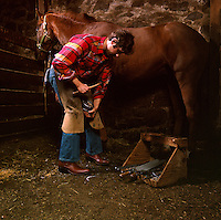 Farrier puts new shoes horseshooing on horse