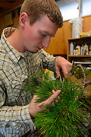 Adam Jones, a bonsai apprentice at the Mansei nursery tending to a tree. Bonsai-mura, Omiya, Saitama Prefecture, Japan, June 25, 2013. The Omiya Bonsai Village was founded in 1925 and is Japan's most famous production center for bonsai.