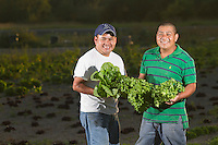 Salvador (white shirt) and his brother Misael Moreles pick and clean lettuce at their farm NW Green Farm Produce at Viva Farms in Burlington, WA on September 7, 2012.  Originally from Mexico the brothers grow 30 different varieties of produce.  This summer they grew 30,000 heads of lettuce and encourage more people to buy produce from local farmers because it is healthier.  (© KarenDucey.com 2012)