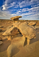 Bisti Shrooms - New Mexico