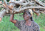 A woman walking home with his firewood she has collected in Ekwaiweni, Malawi.