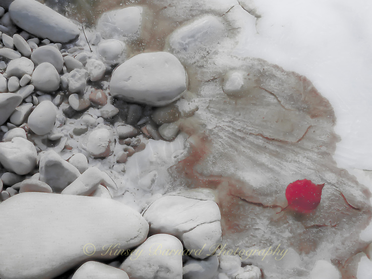 &quot;RED LEAF&quot;<br />