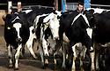 2014_09_03_milk_prices