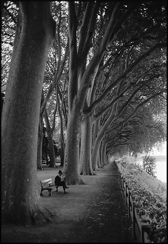 Treeline, Chinon, France by Paul Cooklin