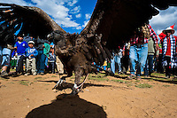 Peruvian peasants gather around a captured Andean condor before the Yawar Fiesta, a ritual fight between the condor and the bull, held in the mountains of Apurímac, Cotabambas, Peru, 28 July 2012. The Yawar Fiesta (Feast of Blood), an indigenous tradition which dates back to the time of the conquest, consists basically of an extraordinary bullfight in which three protagonists take part - a wild condor, a wild bull and brave young men of the neighboring communities. The captured condor, a sacred bird venerated by the Indians, is tied in the back of the bull which is carefully selected for its strength and pugnacity. A condor symbolizes the native inhabitants of the Andes, while a bull symbolically represents the Spanish invaders. Young boys, chasing the fighting animals, wish to show their courage in front of the community. However, the Indians usually do not allow the animals to fight for a long time because death or harm of the condor is interpreted as a sign of misfortune to the community.