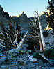 Bristlecone Pine Forest on Wheeler Peak