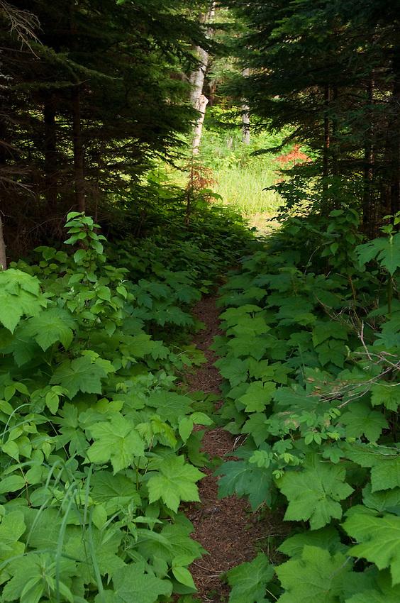 A backcountry hiking trail on Isle Royale National Park.