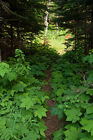 A backcountry hiking trail on Isle Royale National Park.