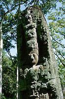 Maya ruins of Quirigua in Guatemala (Classic Period): Stela D representing King Cauac Sky