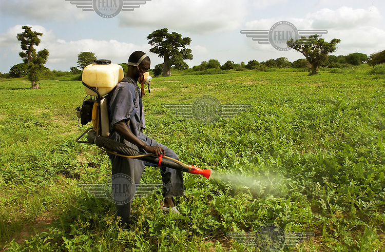 A man sprays pesticide to prevent the spread of locusts. In 2004 much of west and north Africa was affected by the largest infestation of desert locust in over 15 years.