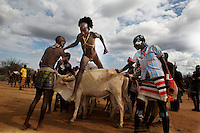 During bull jumping Hamar women beg to be whipped in the dry Kiskie river just outside Turmi.  The river is seasonal but is usually running this time of year.  There is a drought all over east Africa.  Women are begging to be whipped because without the marks they are not considered to be part of the family and thus not deserving of their support.  The whip marks mean they will have support thru out their lifetimes by their family members.  On the day of the bull jumpers marriage they can go to his house and take anything they want.  The whippers are Mazes (the last group to go thru bull jumping) and they are in the process of getting married. They only eat goat and honey and milk provided by the community.  Marriage is a strange process... all marriages are arranged.  Once they have done the bull jumping they go somewhere secret and rub cow dung on each others hands... BUT then they live with their parents for the next five or six years and they have sex with other partners but not with each other.  Once this crzaed sorting out period is over THEN he takes her to his hut and they are man and wife, but they may still retain boyfriends and girlfriends.  If a girl loves her boyfriend MORE than her husband she will only allow sex with her husband around the time of her period and sex with boyfriend when it is possible to father children.  The children then are officially the progeny of the husband...Contacts:..Lale Biwa.lalebiwa@yahoo.com