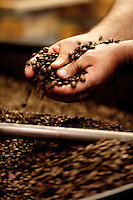 Artisan coffee - roasting coffee beans at Tazza D' Oro, cafe in the historic centre of Rome, Italy