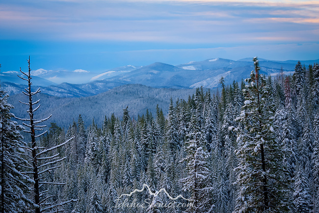 Idaho, North, Idaho Panhandle, Kootenai County, Coeur d'Alene.  The snow covered trees in the Coeur d'Alene National Forest and view of the Coeur d'Alene Mountains at dawn in late autumn.