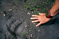 CANADA, ALBERTA, KANANASKIS, MAY 2002. A hiker finds a Grizzly bear print on the trail. The Kananaskis Country provincial park is home to Canada's most beautiful nature and wildlife. It has also escaped the mass tourism as in Banff National Park. Photo by Frits Meyst/Adventure4ever.com