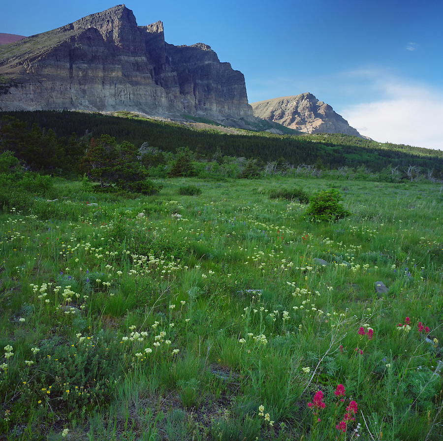 A sunny day in a field with wildflowers in the Two Dog Flats area of Glacier National Park, Montana.