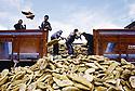 Turquie 1991.Les réfugiés kurdes sur la frontière: distibution de pains.Turkey 19991.Kurdish refugees on the border: breds'distribution
