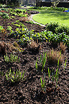 Fresh, green stems grow in the sun in early spring in Regent's Park, London, England