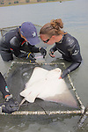 Katie & Melissa Working On Bat Ray