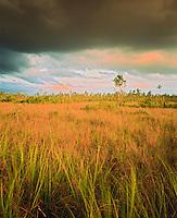 Sawgrass prairies and thunderstorm over the Everglades, Everglades National Park, Florida   Grassy swamplands  Royal Palm  Anhinga Trail