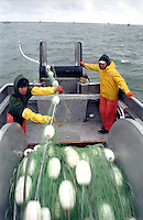 Deckhands onboard the F/V Little Moose pull in an empty net while fishing for sockeye salmon in the summer of 1998 in Bristol Bay Alaska.  Bristol Bay is home to the world's largest sockeye salmon fishery.  The commercial salmon drift gillnet fishing fleet is limited to boats no longer than 32 feet in length.  There were over 1,800 permanent entry permits listed in 2002 which each vessel is required to have.  Typically boats fish with two or three deckhands.  Peak of the season is around July 4th in this fishery which lasts about a month. The rivers also get a fair amount of chum, king, and chinook salmon. Bristol Bay is located in the southwest part of Alaska. This fishery is managed by &quot;the Alaska Department of Fish and Game&quot; and is a sustainable fishery.  Until around the year 2000, fishing on the Egegik North Line was lively and lucrative..