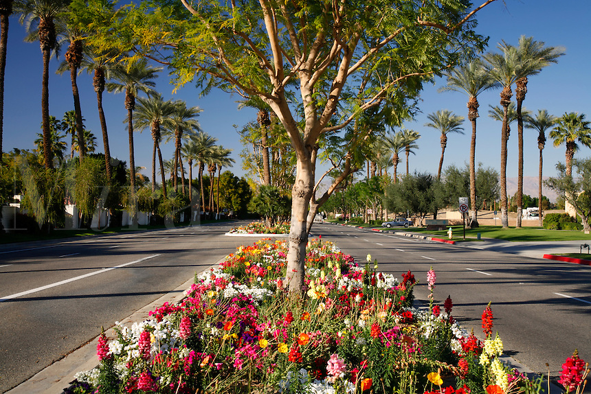 9176B143 - Tree and flower lined avenues and roads