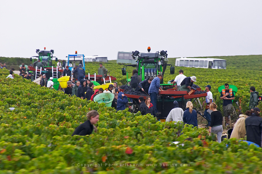 Harvest workers picking grapes. Pauillac. Medoc, Bordeaux, France