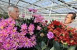 Foto: VidiPhoto<br /> <br /> VALKENBURG &ndash; Aangenaam verrast inspecteert de Scheveningse bloemist Ton Verzijl (rechts) donderdag de kwaliteit van de dahlia&rsquo;s van kweker Marius Koppert in het Zuid-Hollandse Valkenburg. Het zonnige, warme weer van de laatste weken zorgt voor ideale groeicondities van de seizoensbloemen, die gebruikt worden voor de bloemdecoraties in de Ridderzaal op Prinsjesdag. De fleurige arrangementen staan onder meer pal naast de troon, bij de entree en langs de balustrade van de zaal. Dit jaar zijn de hoofdkleuren rood, roze en lila. De kleurcombinatie wordt elk jaar bepaald door de Staten Generaal. In totaal worden ruim 3.000 dahlia&rsquo;s, asters en gladiolen verwerkt in de koninklijke decoraties, geleverd door diverse geselecteerde kwekers van seizoensbloemen. Na afloop van Prinsjesdag gaan de bloemen naar diverse verzorgings- en verpleeghuizen in de regio Den Haag. Verzijl verzorgt voor het vierde jaar op rij de bloemversiering in de Ridderzaal.