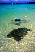 Snorkeler with large green sea turtle at laniakea beach on Oahu's north shore