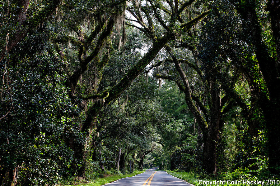 TALLAHASSEE, FLA. 8/23/10-VISITTALLY-082310-HACKLEY-A drive on Miccosukee Road will treat visitors to one of Tallahassee's canopy roads...COLIN HACKLEY PHOTO