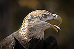 Chincoteague Birds