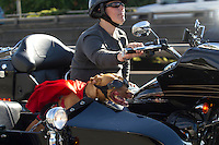 Pit bull mix, Lucy, rides in a sidecar next to her mom, Brande Schweitzer, who drives a Harley-Davidson, in Seattle, Washington. Schweitzer and her dog attract attention wherever they go.
