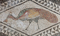 Peacock within black and white diamond shaped border, 1st century AD, part of the mosaic floor of the atrium of the Casa di Paquio Proculo, or House of Paquius Proculus, Pompeii, Italy. Pompeii is a Roman town which was destroyed and buried under 4-6 m of volcanic ash in the eruption of Mount Vesuvius in 79 AD. Buildings and artefacts were preserved in the ash and have been excavated and restored. Pompeii is listed as a UNESCO World Heritage Site. Picture by Manuel Cohen
