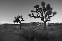 Joshua Tree Red Mountains At Dusk - Lensbaby - Black & White
