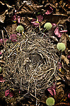 small bird nest made from grass and twigs with red petals