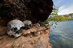 Very old skulls on the ledge in the karst limestone walls of a Raja Ampat island