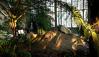 Plant History Glasshouse (formerly Australian Glasshouse), 1830s, Rohault de Fleury, Jardin des Plantes, Museum National d'Histoire Naturelle, Paris, France. Low angle view of cyatheales in the glasshouse.