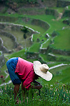 PHILIPPINES (Batad, Province of Ifugao). 2009. Woman working in her rice field near Batad village.