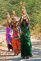 Women in colorful saris carrying firewood in rural Rajasthan. (Photo by Matt Considine - Images of Asia Collection)